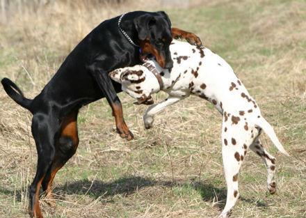 مصارعة شرسة لانواع الكلاب