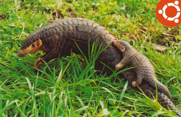 Ubuntu 12.04 LTS Is The Precise Pangolin, mascot, photo, ubuntu 12.04 LTS, picture,download ubuntu 12.04, pangolin download, the pangolin, giant pangolin, pangolin sql, african pangolin 