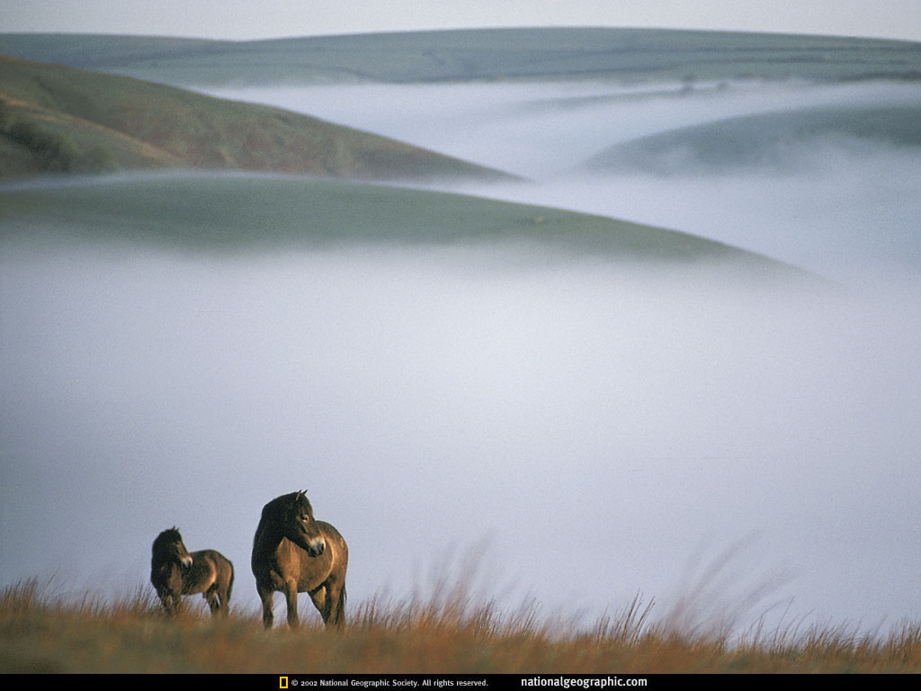 Great   Wallpaper Horse National Geographic - wild+horses+wallpapers+36  Gallery_604334.jpg