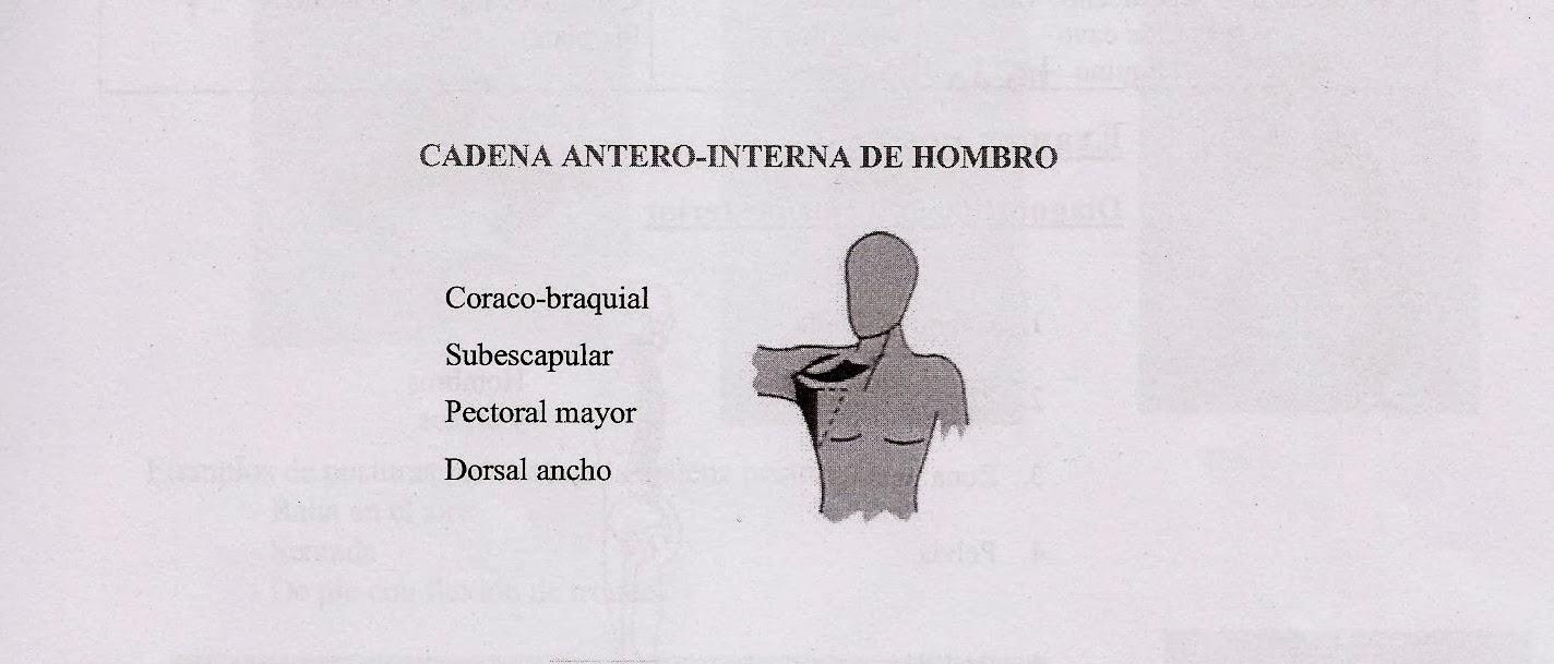 Pilates Marisa Rodriguez: SGA: Las cadenas musculares (II)