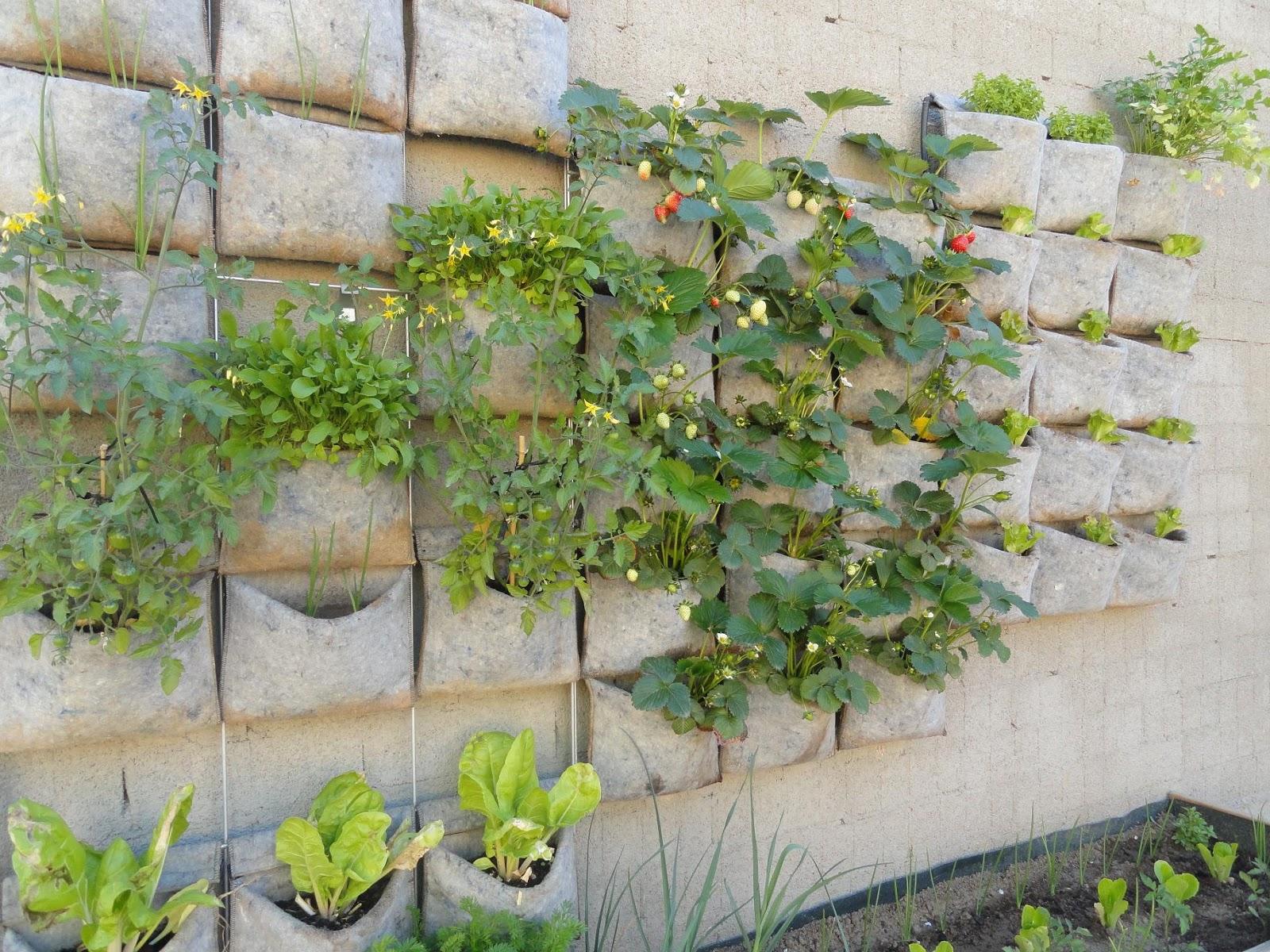 fotos de jardins urbanos : fotos de jardins urbanos:Huerto urbano vertical