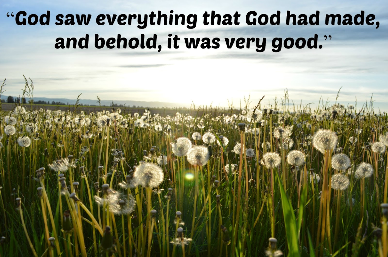 God saw everything, and it was good; Lisa Friedman