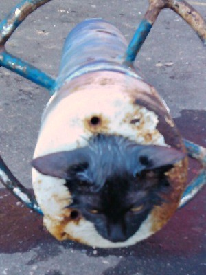 Gato ficou preso em tubo de ferro (Foto: Divulgação/Corpo de Bombeiros)
