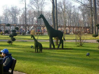 Girafa verde si naturala