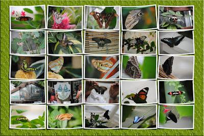 sayn butterfly garden