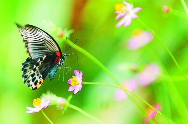 kupu-kupu itu : Aku :D