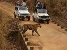 wildlife safari in Kanha