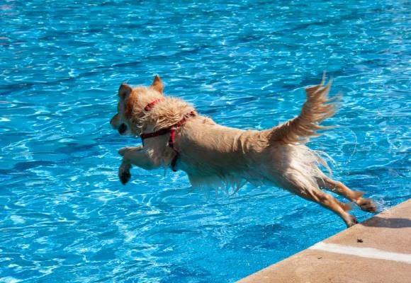 Trixie Piscina para Perros - La Fauna Online