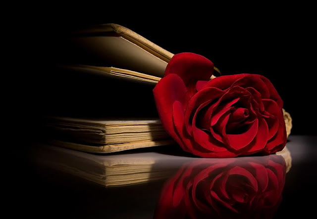 a spotlight on a red rose in an old book with a black background