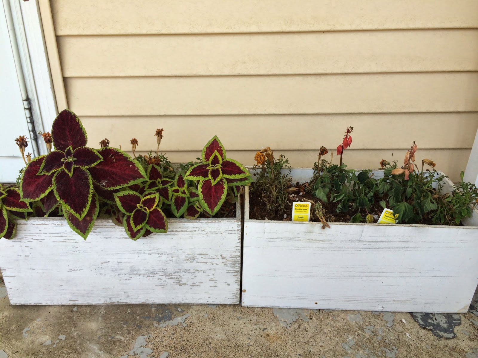 This Little House of Mine: Planter Box Update