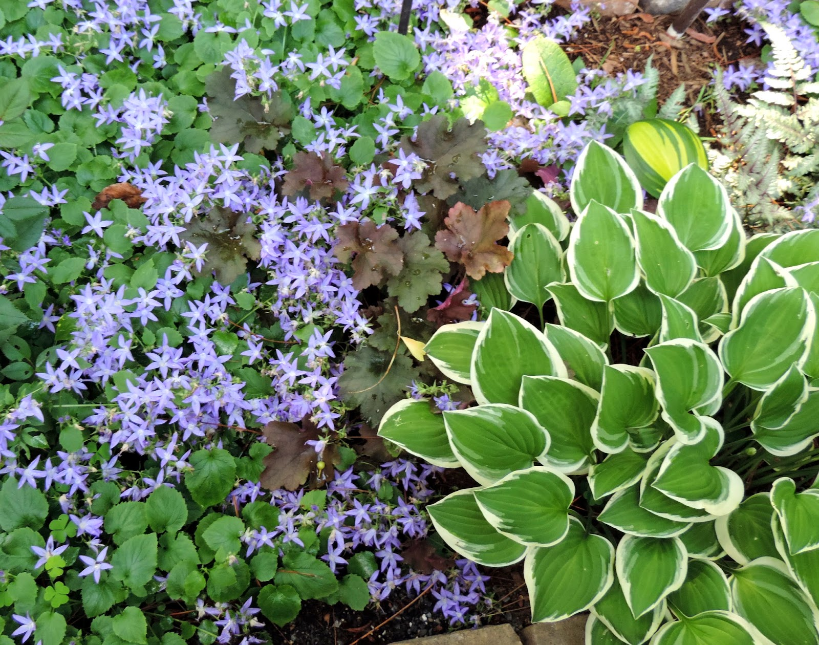 The Northern New York Gardener July Blooms
