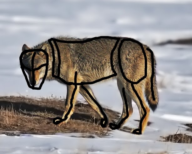 Bren Warom Bmet Games Animal Anatomy Research