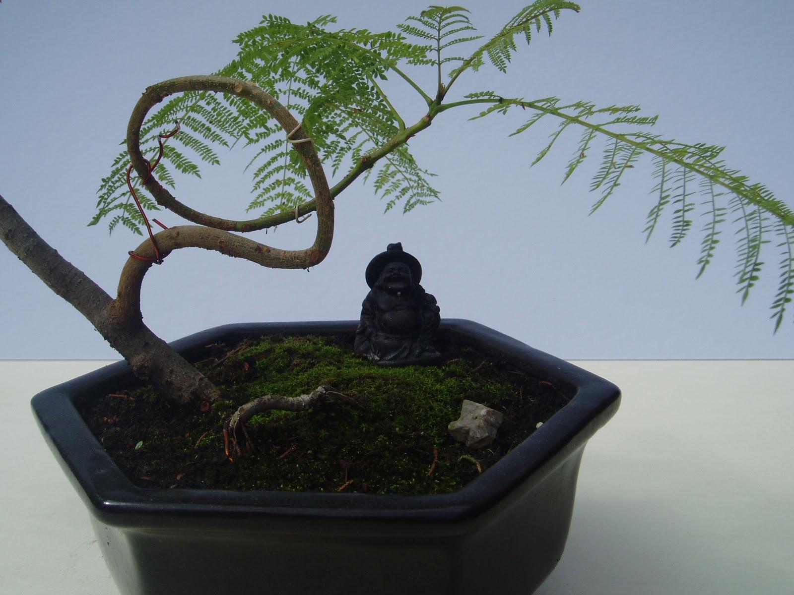Forma adecuada para bonsai 20110706_41