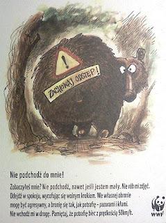 niedźwiedź, niedzwiedz, tatry niedźwiedź, w tatrach, niedźwiedzie