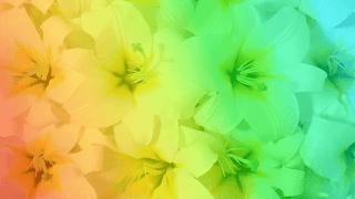 flores-brancas-amarelas com fundo multicor