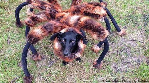 العنكبوت-الكلب العملاق أكثر مقاطع الفيديو مشاهدة لعام 2014