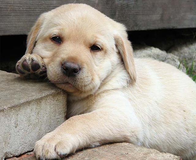 8 fotos adoráveis de filhotes de cachorros