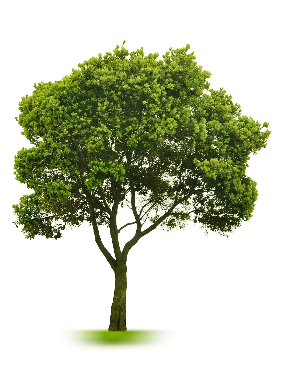 Speelgoed om in een boom of rond een boom te hangen (buiten hangmat ...