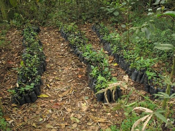 Biodiversidad y conservaci n c mo conseguir las plantas for Viveros en colombia