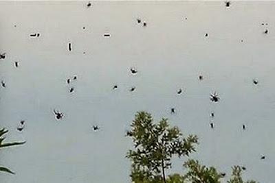 السماء تمطر عناكب في أستراليا