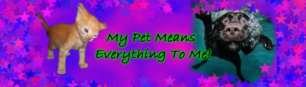 My Pet Means Everything To Me