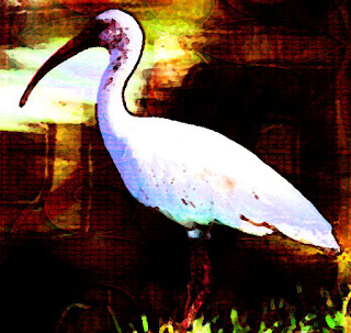 The nature of the akh changed over time; in Egyptian Mythology, the akh is represented by the ibis bird.