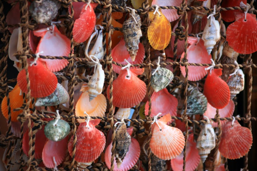 Ракушки, seashells, Анапа, черное море, лето 2014
