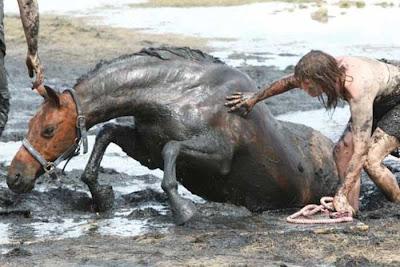 Resgate Cavalo 9 - Clique na imagem para ampliar