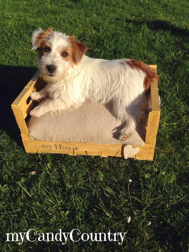 creare cuccia per cani o gatto da una cassetta di legno