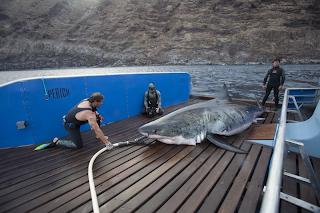 Shark Men get their biggest catch