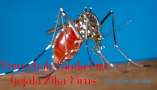 Apa Itu Virus Zika? Penyebab Tanda Ciri Gejala Zika Virus
