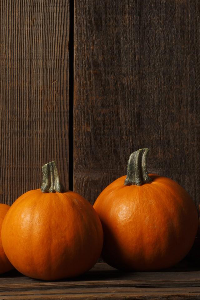fall pumpkin background iphone wwwimgkidcom the