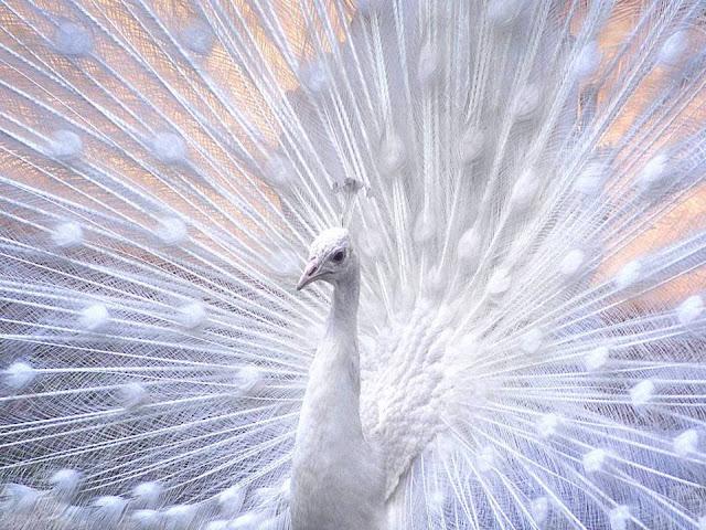 White Wonders 2