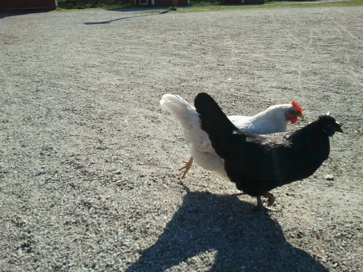 putas c pollas grandes