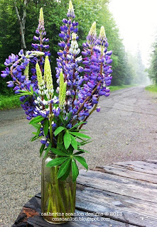 Maine Lupines by Catherine Scanlon cmscanlon.blogspot.com