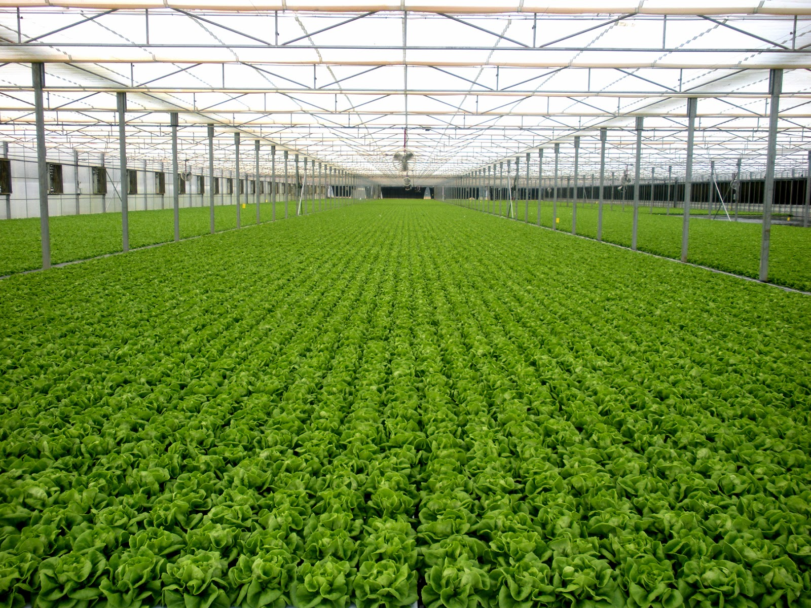 J Amp S Minifarm