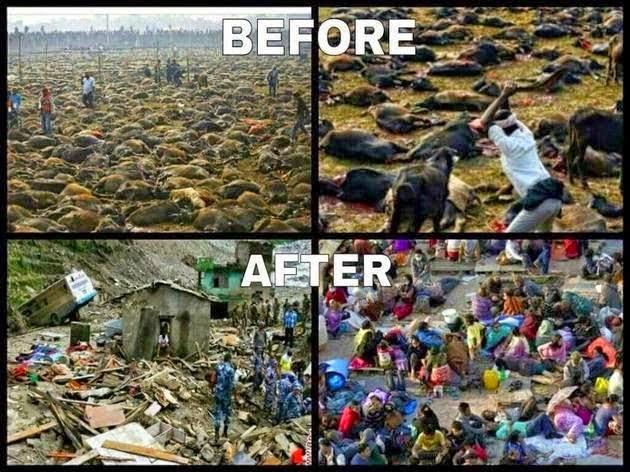 pembantaian hewan, gempa nepal, ritual