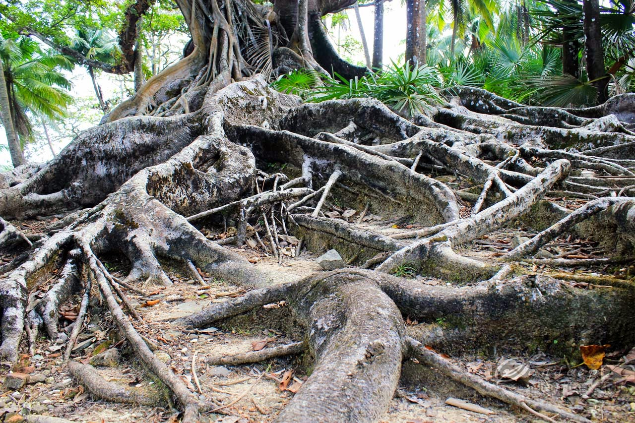 Huge roots of the tree