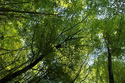 Image of Léaz forest