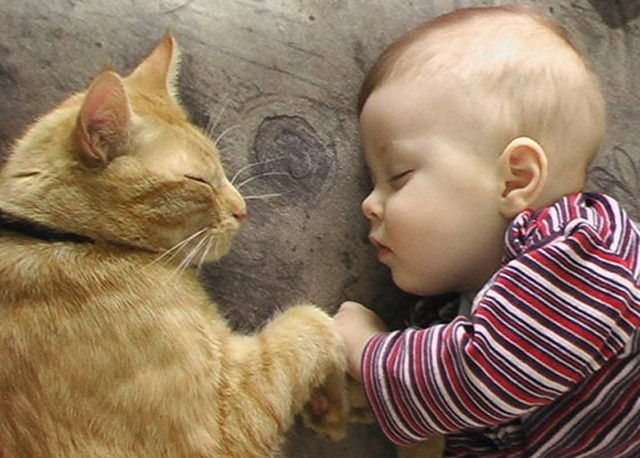 Napping With Pets Seen On www.coolpicturegallery.us