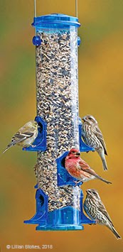 Stokes Select™ Bird Feeders and Bird Seed