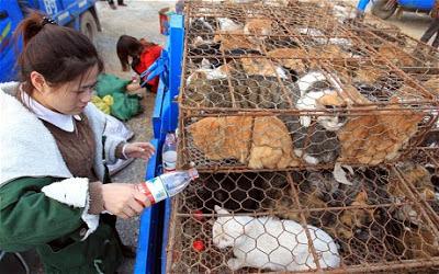Caminhão é parado na China com dezenas de gatos que seriam abatidos para consumo