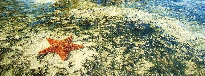 Deniz yıldızı ve balıkların kapak fotoğrafları ve resimleri
