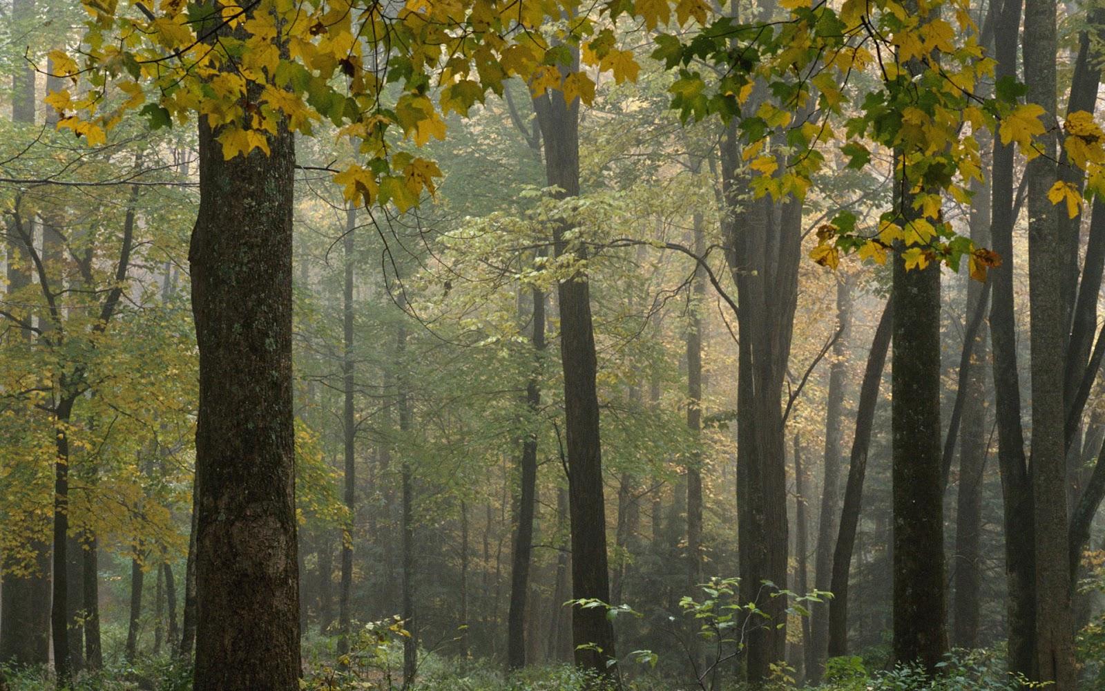 http://2.bp.blogspot.com/-IFzd8GDEMks/UD7n6wwRGPI/AAAAAAAAA8k/tk4VHYFUGNo/s1600/inside+the+forest.jpg