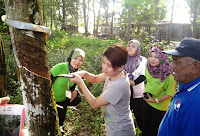 Rubber Tapping Experience