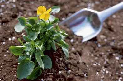 How do fertilizers help plants grow how do fertilizers help plants grow - Organic flower fertilizer homemade solutions ...