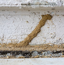 termites occupying entire underwater pipe and tubes
