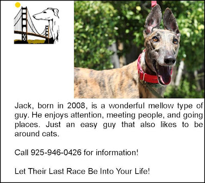 Freckles the Dog Golden Gate Greyhound Rescue