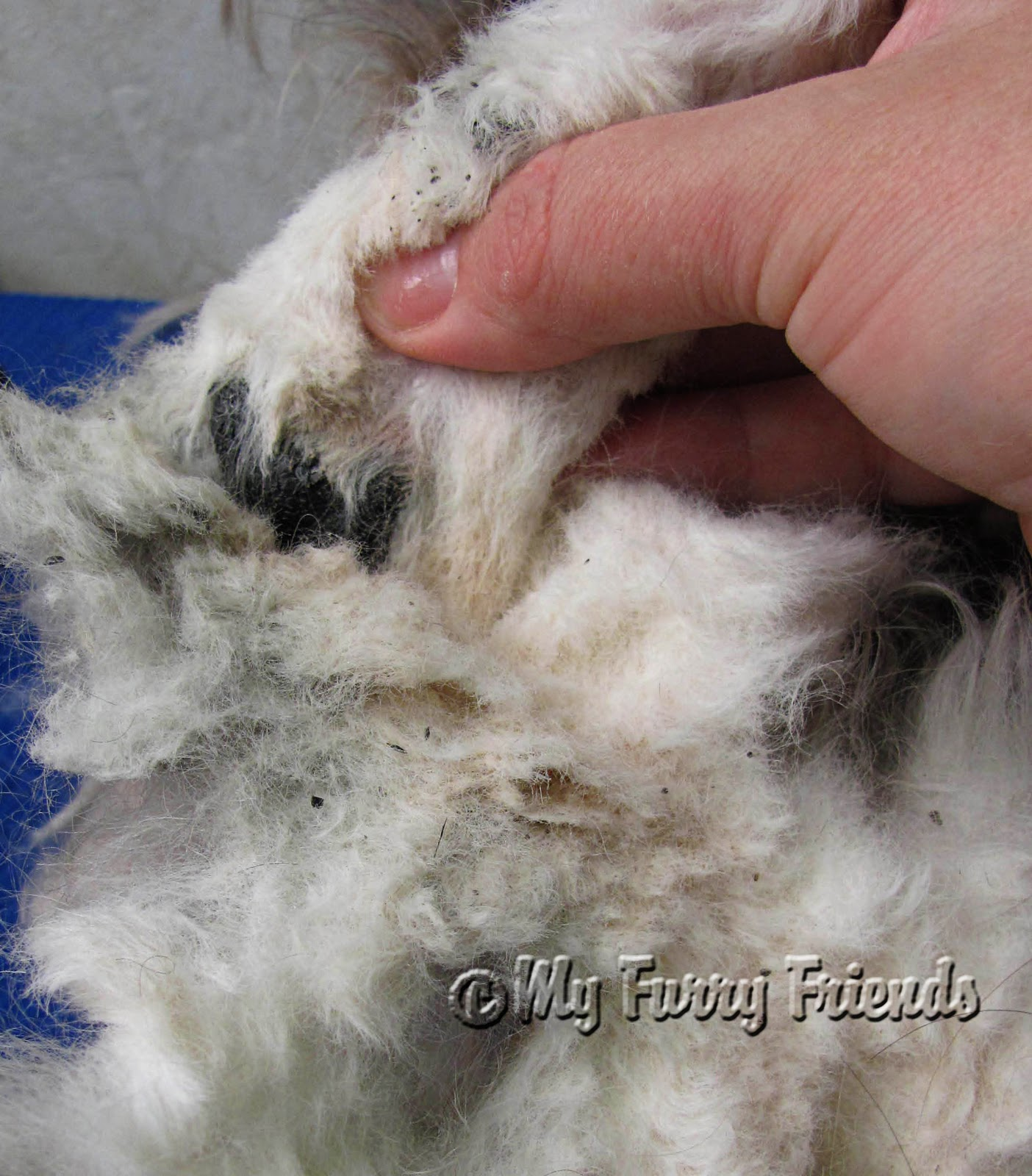 How To Remove Mat Behind Dogs Ear