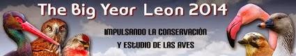 León E-1